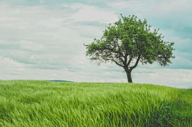 草原に木が一本
